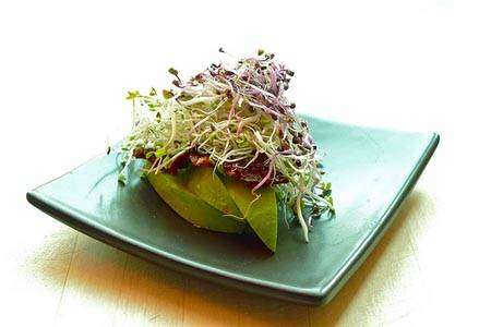 Graine germée salade