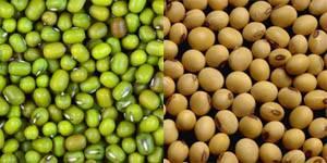 Graines de haricot mungo et de soja
