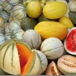 melons-varies.jpg