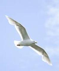 oiseau-accueil