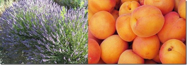 lavande-et-abricots