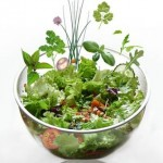 salade-aux-herbes.jpg