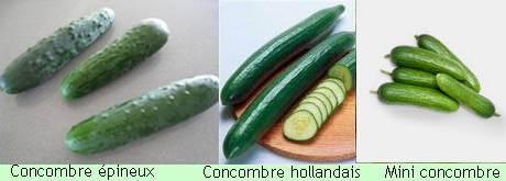 Concombre épineux, hollandais et beit-alpha